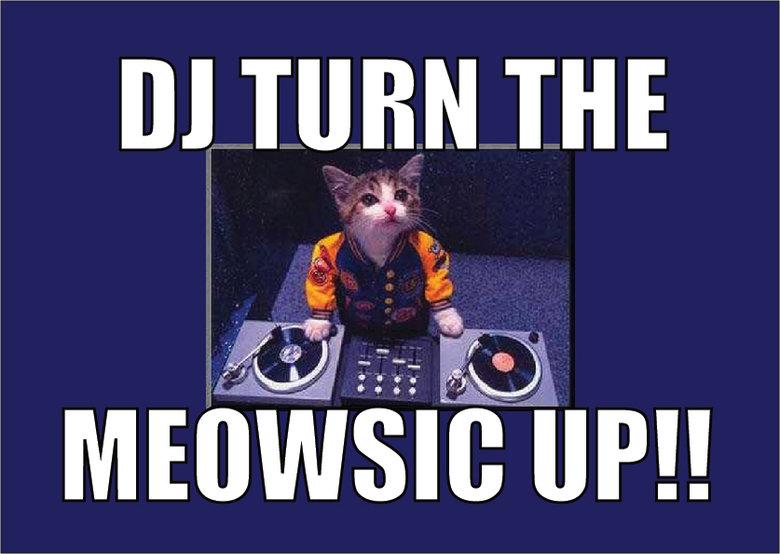 DJ Turn The Meowsic Up!!. . lilo m, lol aww