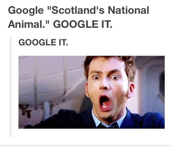 "do it fagget. . Google ""Scotland' s National Animal."" GOOGLE IT. GOOGLE IT.. I didn't have to google it, I already knew. do it fagget Google ""Scotland' s National Animal "" GOOGLE IT I didn't have to google already knew"
