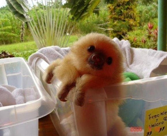 Do you guys like sloths?. cuz i love sloths.. sloth dump? Do you guys like sloths? cuz i love sloths sloth dump?