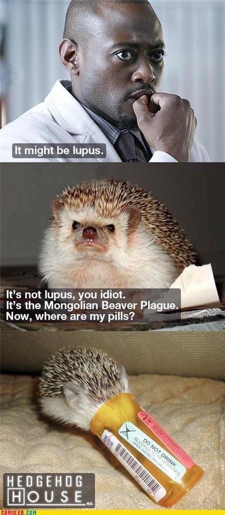 doctor doctor. doctor doctor give me the news I got a bad case of bluuuuue~ balls...yeeeahhhhh~ (music n' ). ts net lupus, cm idi. We the Mongolian Beaver Plagu doctor black guy