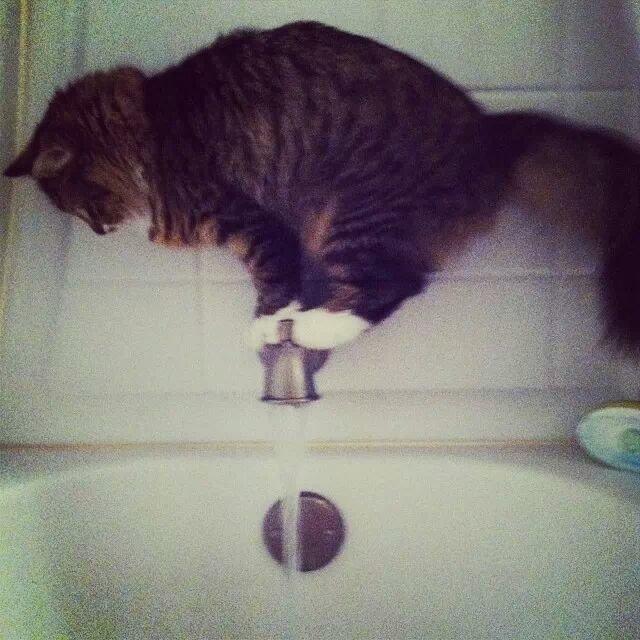 Doesn't like baths.. . Cars aww