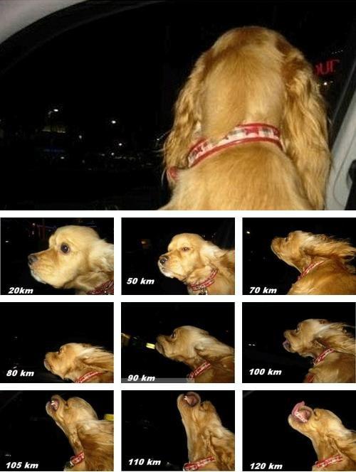 Dog Car. .. km/h Dog Car km/h