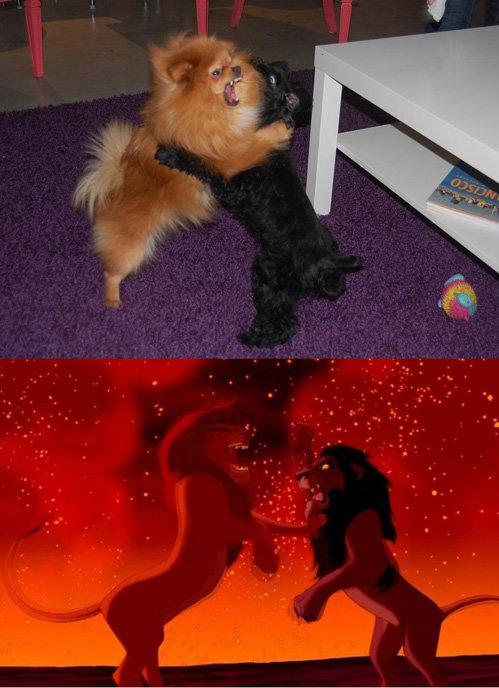 Dog Fight. . Dog Fight