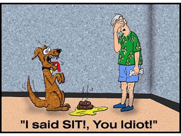 "dog. . I said sari, You ediot!"" Stupid Dog"