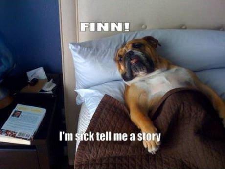 Doggy Dog Dog Doggy Dog. doog dog dog dog . Cat. Doggy Dog doog dog Cat