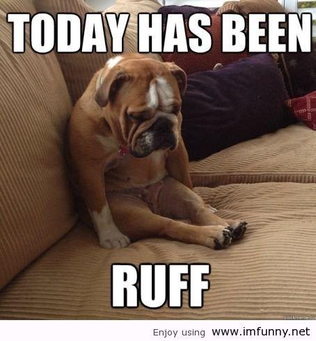 dogs ruff day. . Enjoy using ill! Dogs sitting funny