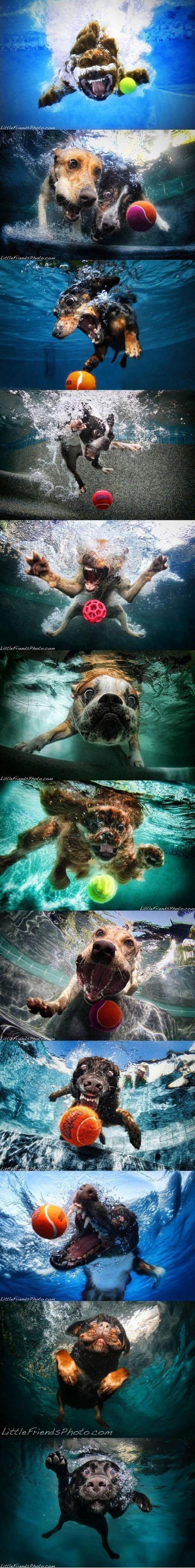 Dogs Underwater. . Dogs underwater funny