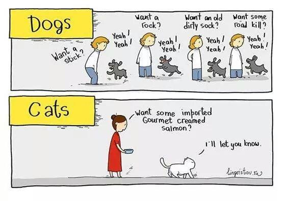 "dogs vs cats. . tifi"" gt g: , lerl batmon') dogs vs cats tifi"" gt g: lerl batmon')"