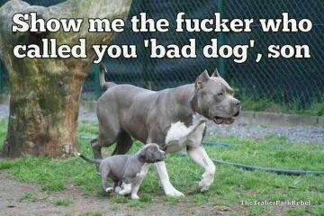 "Dogs. . jinn 'had dog"", son Dogs jinn 'had dog"" son"