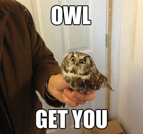 Don't piss off an owl.. . Don't piss off an owl