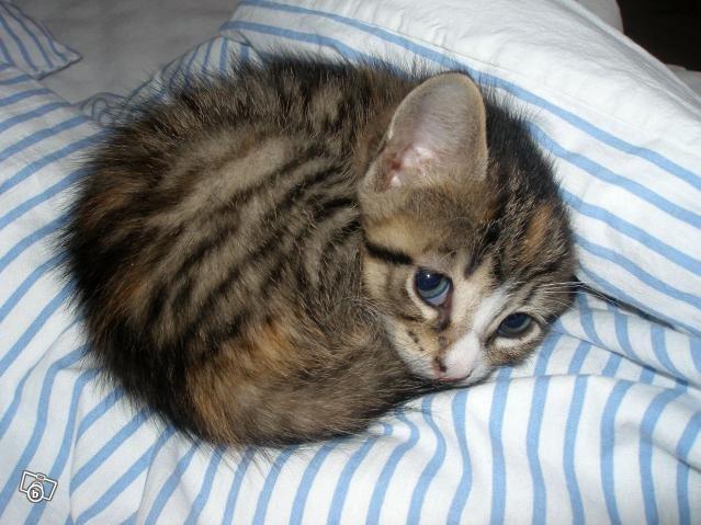 Don't hurt me. .. happy caturday Cute Kitten cat sad