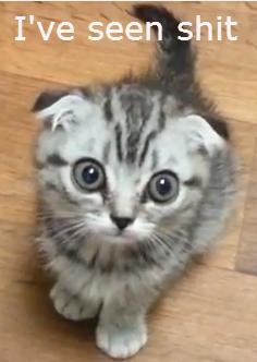 Don't ask what he has seen. a cat... He's seen , duh. cat eyes Ive seen shit