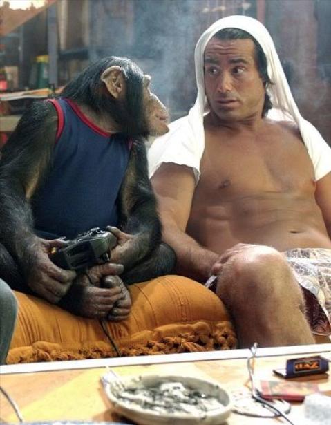 dont judge me monkey. . dont judge me monkey