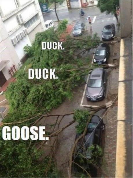 Duck Duck Goose. Start running... GOOSE!!! Duck Goose Start running GOOSE!!!