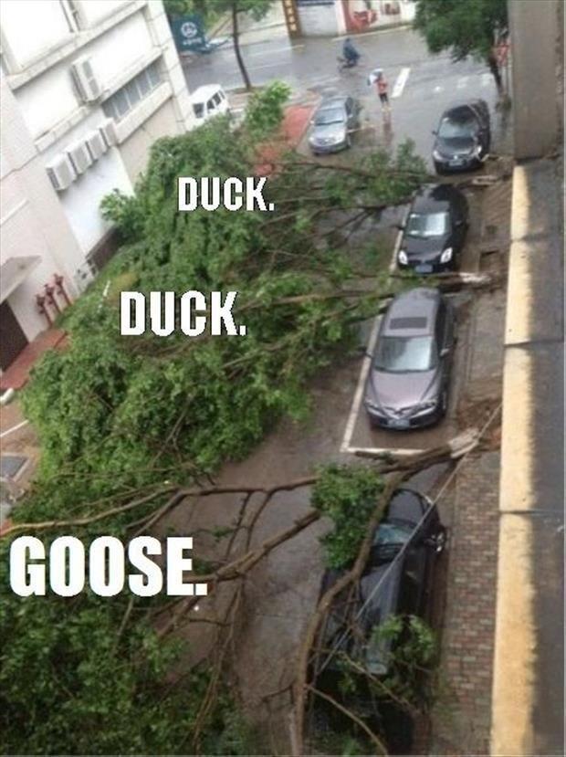 Duck. Duck. Mother Nature.. .. karma... that wasn't a parking spot Duck Mother Nature karma that wasn't a parking spot