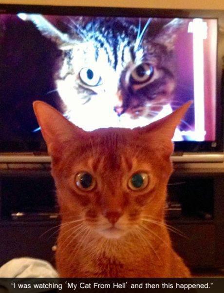"Dude, run. . F was watching ""My Cat Ftom Hail"" and then ths happened."" Dude run F was watching ""My Cat Ftom Hail"" and then ths happened """