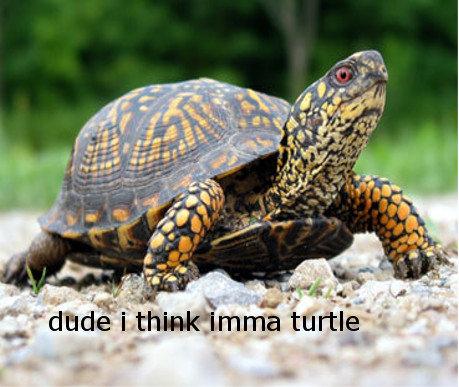 DUDE. .. Dude... i think you're a tortoise DUDE Dude i think you're a tortoise