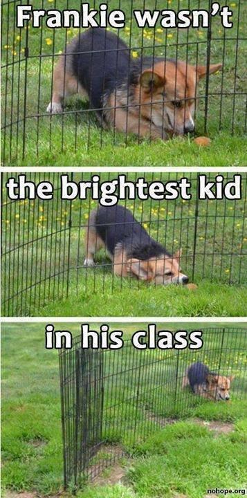 Dumb Kid. Source: Imgur. Dumb Kid Source: Imgur