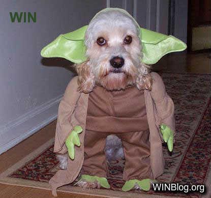 halloween costume. dog is not amused. Costume Halloween Dog win fail