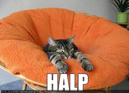 HALP. lolcat uses HALP<br /> its not very affective.. Human used camera it's super effective kitteh needs halp