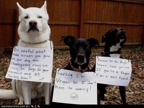 Happy Thanksgiving Dogs. .. Happy Thanksgiving Dogs