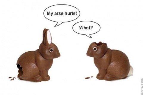 Happy Easter. . happy Easter Bunnies
