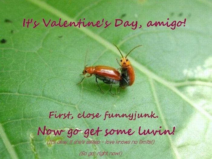 Happy Valentine's Day!. Happy Valentine's Day - Love Knows No Limits<br /> ..<br /> .<br /> Yea, I'm doing a crappy V-Day series. Don't like i Valentines valentine day Love know no limit amigo Bug longlivetheking