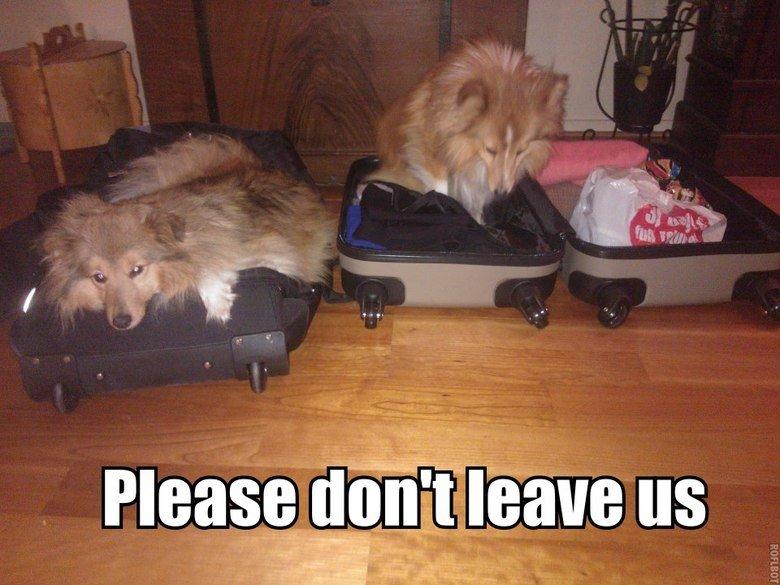 Hard to leave. OC, my dogs. hah L ad El A tll Eid arm r,. Hard to leave OC my dogs hah L ad El A tll Eid arm r