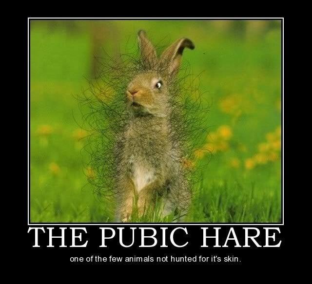 Hare. I bet hes really Itchy. tune tithe few animals not hunted far it' s .'Mml Hare I bet hes really Itchy tune tithe few animals not hunted far it' s 'Mml