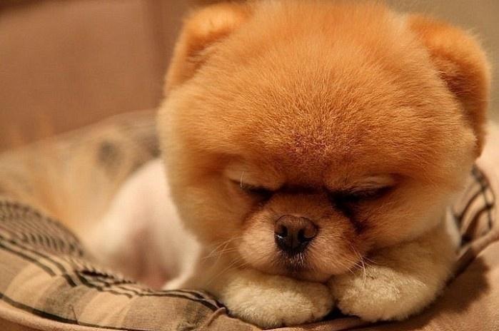 He's so fluffy!. .. I want it. He's so fluffy! I want it