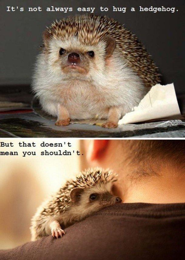 hedgehog. . It' s not: always easy to hug a hedgehog. But that doesn' t I mean you shouldn' hedgehog It' s not: always easy to hug a But that doesn' t I mean you shouldn'