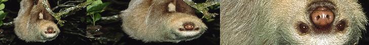 HI. IYA.. there's a sloth channel sloth
