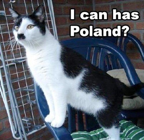 hitler cat. .. No. cat Hitler