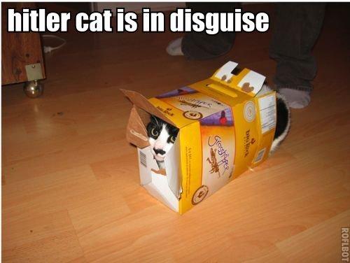 hitler cat is in disguise. hitler cat is in disguise. Miler cans in. That's not Hitler cat, that's box c.... no, wait! It is Hitler cat! How cunning hitler cat is in