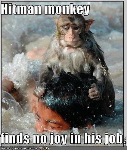 hitman monkey. he is sad. sad funny hitman
