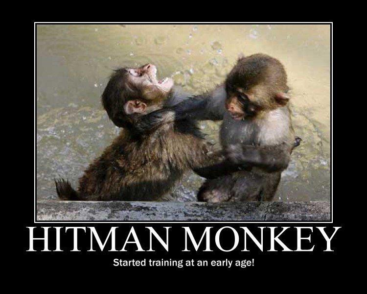Hitman monkey Jnr. . HOTM Started training at an early age!. Hitman Monkey takes no joy in his work. funny hitman monkey Ninja martial arts training