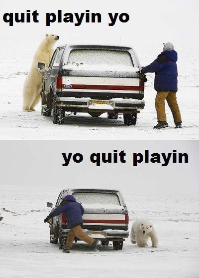 Hold Still. . quit playin yo. Tyrone the albino bear. Hold Still quit playin yo Tyrone the albino bear