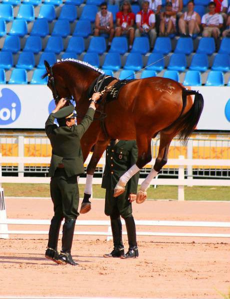 Horse!. Wingaurdium Leviosa!. get down Youre drunk