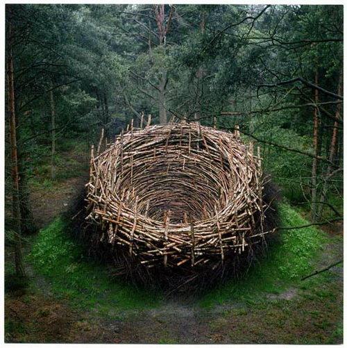 how a nest looks to a bird. . how a nest looks to bird