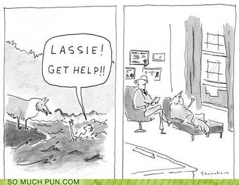 LASSIE!! BAAAD DOOOOG!!!. . LASSIE!! BAAAD DOOOOG!!!