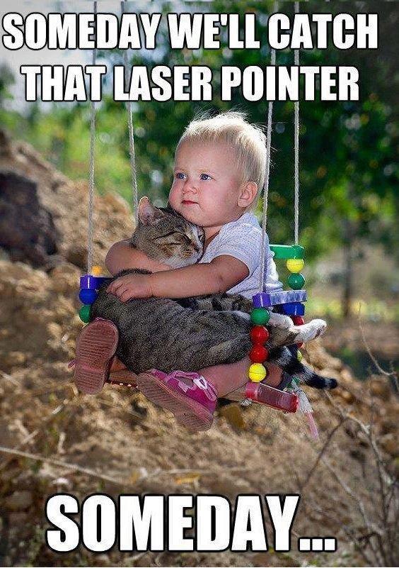"LAZEERRR POINTTERRR. . Ell GATE"" viii' POINTER. Cats face when it finally got it. LAZEERRR POINTTERRR Ell GATE"" viii' POINTER Cats face when it finally got"