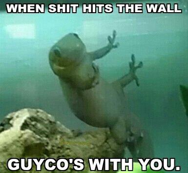 Like a good meme... Like a g6. guyco stickyhans