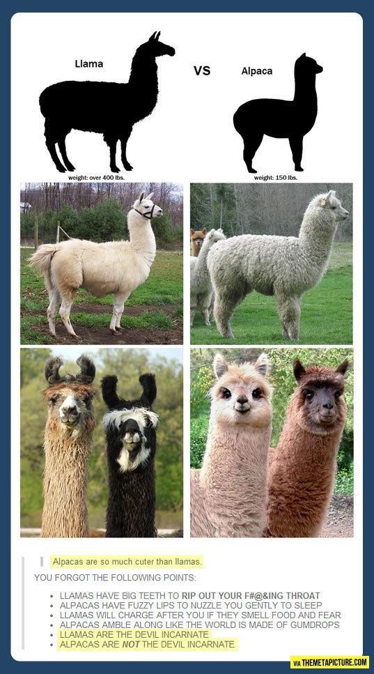 "Llama Vs. Alpaca: Who Will Win?. Alpaca of course. I mean DUH!. A% ilivid are an much cuter than llamas. mu THE Bidrag. "" EEG TEETH TD RIP EMT ""I' F# -[ THREAT  llamas are devilspawn Alpacas adorabler"