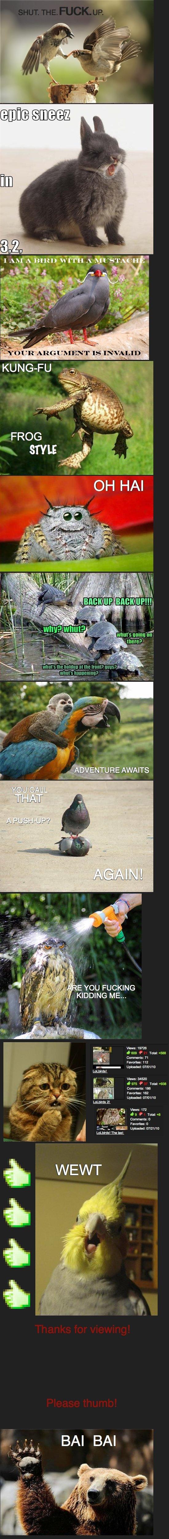 LoL animals. Part two:. Don't mind me I'm just washing my owl Evasion LoLbirds lol animals