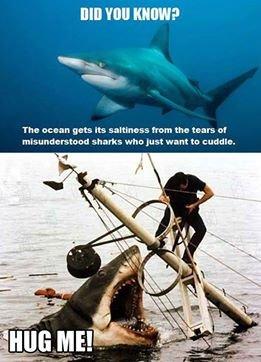 "Lonely Shark. blehrgr. fill! HEW? Tho '56 HEN gots "" tho It ITS whirled want ta . Shark hug stuff"
