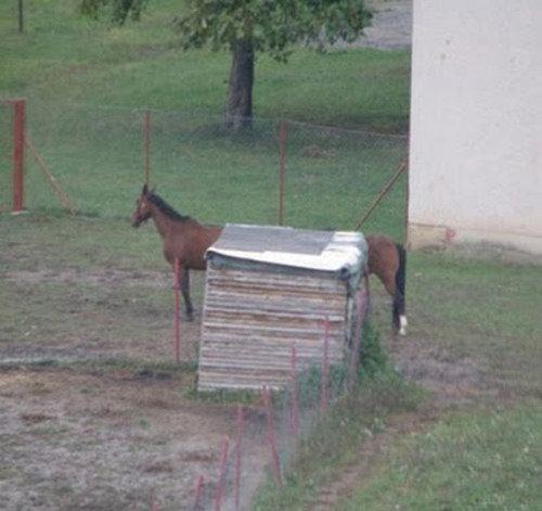 Long Horse. . interesting Long Horse Animals