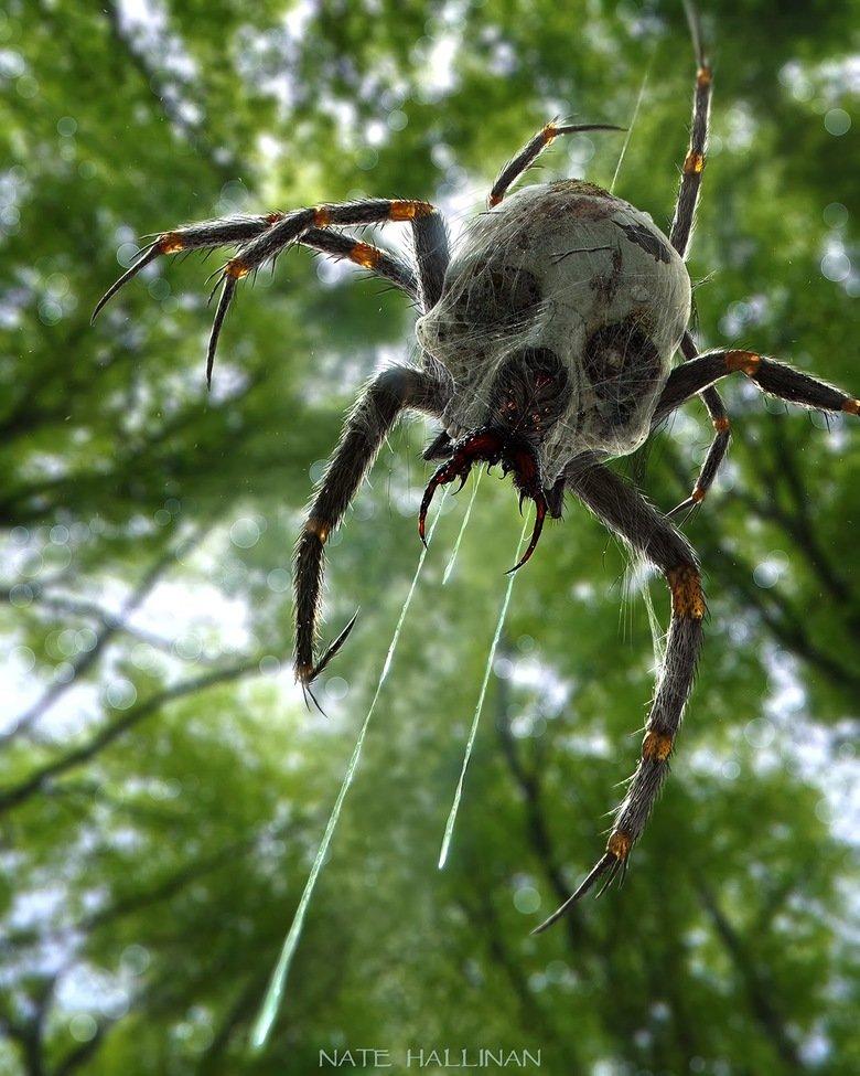 lvl 100 nope. .. From The legend of zelda spider nope