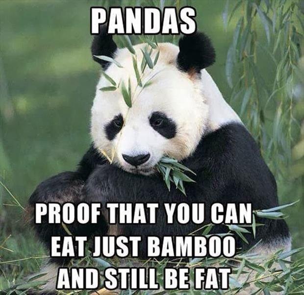 "Pandaboobs. . s EAT HIST "". at A , apatite, It Pandaboobs s EAT HIST "" at A apatite It"