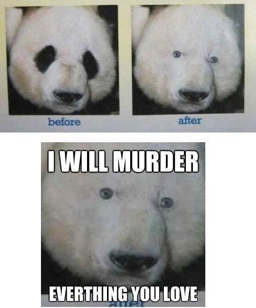 Pandas. . I Wwll EVREYTHING Yoo mu:. he kinda look like a Polarbear now Pandas I Wwll EVREYTHING Yoo mu: he kinda look like a Polarbear now