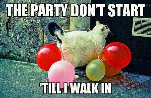 party cat. . party cat